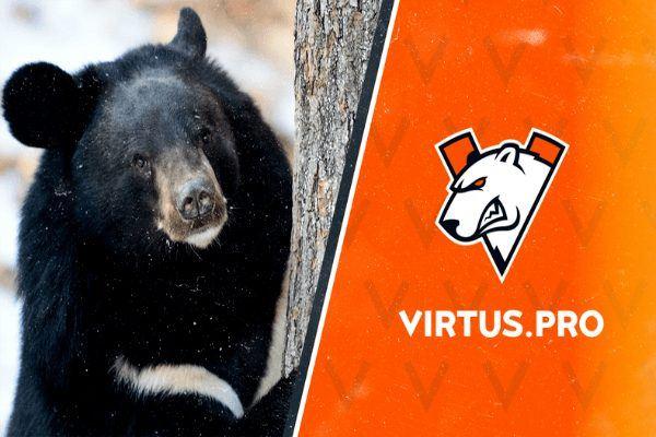 Медведь Vitrus Pro